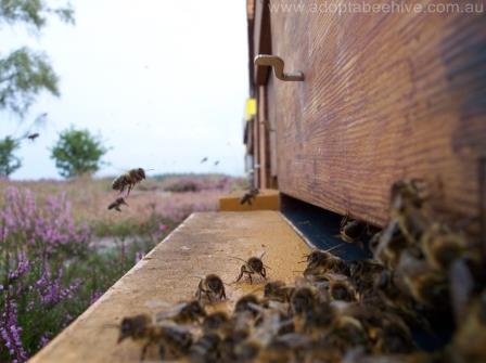 bees flying home to sanctuary