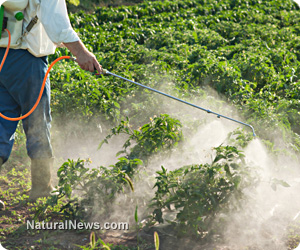 pesticide Spray Crops Farm